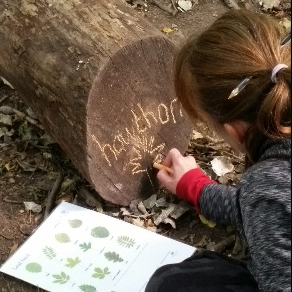 learning about trees through literacy